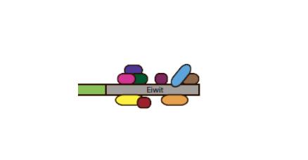 weergave interacterende eiwitten